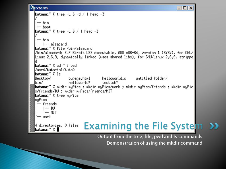 Output from the tree, file, pwd and ls commands Demonstration of using the mkdir command Examining the File System