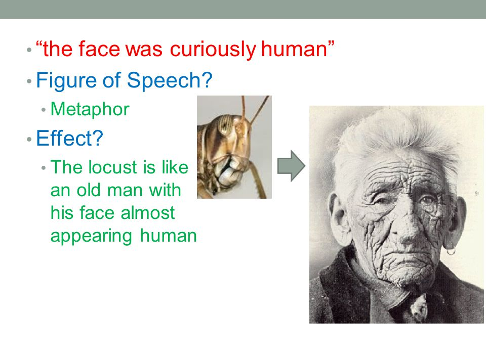 the face was curiously human Figure of Speech? Metaphor Effect? The locust is like an old man with his face almost appearing human
