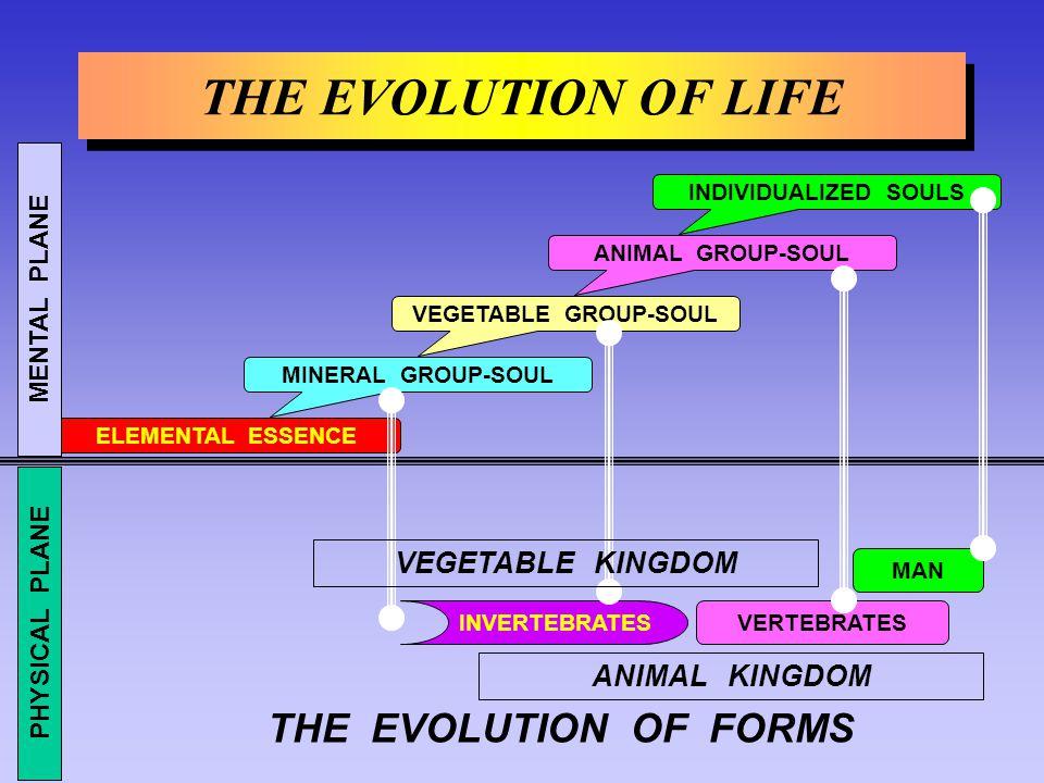 MAN THE EVOLUTION OF LIFE INDIVIDUALIZED SOULS VEGETABLE GROUP-SOUL MINERAL GROUP-SOUL ELEMENTAL ESSENCE VERTEBRATESINVERTEBRATES ANIMAL KINGDOM ANIMA