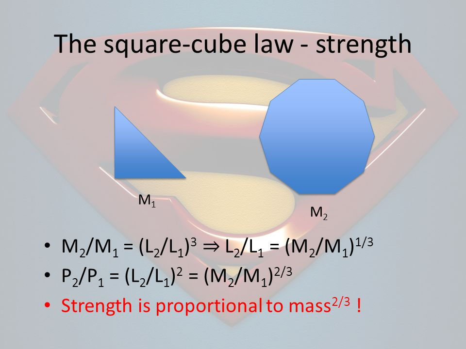The square-cube law - strength M1M1 M2M2 M 2 /M 1 = (L 2 /L 1 ) 3 L 2 /L 1 = (M 2 /M 1 ) 1/3 P 2 /P 1 = (L 2 /L 1 ) 2 = (M 2 /M 1 ) 2/3 Strength is proportional to mass 2/3 !