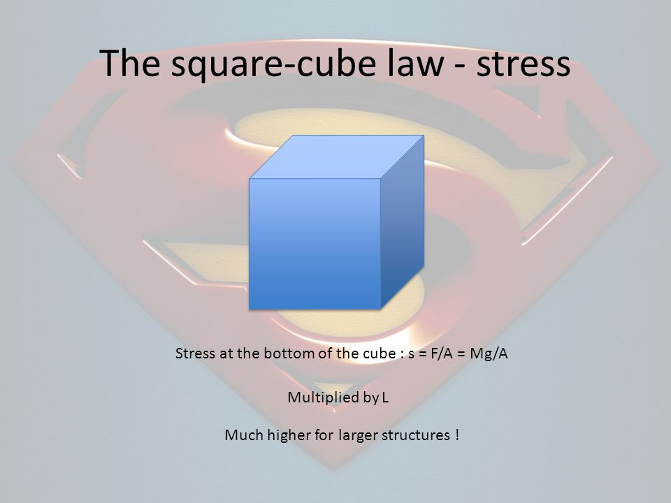 The square-cube law - stress Stress at the bottom of the cube : s = F/A = Mg/A Much higher for larger structures .