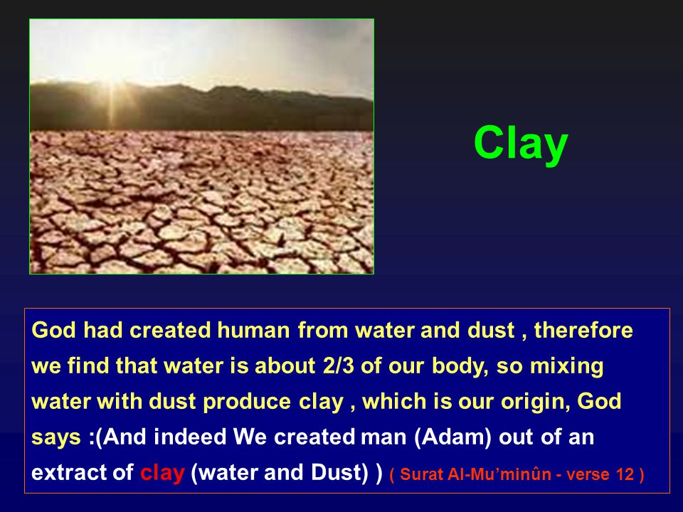 God had created human from water and dust, therefore we find that water is about 2/3 of our body, so mixing water with dust produce clay, which is our origin, God says :(And indeed We created man (Adam) out of an extract of clay (water and Dust) ) ( Surat Al-Muminûn - verse 12 ) Clay