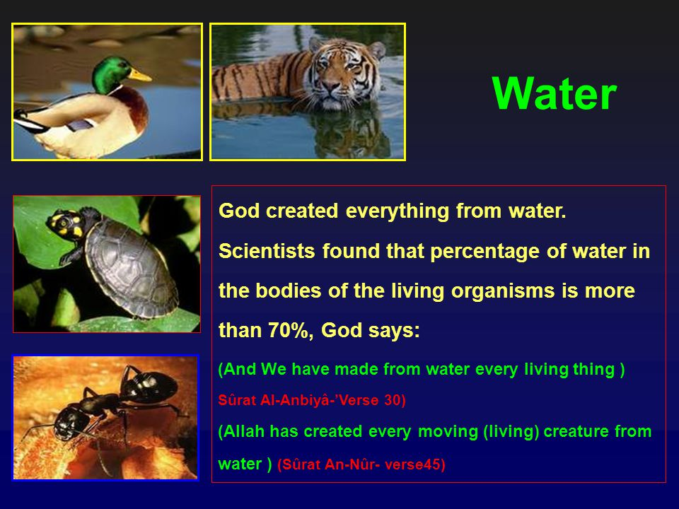Water God created everything from water.