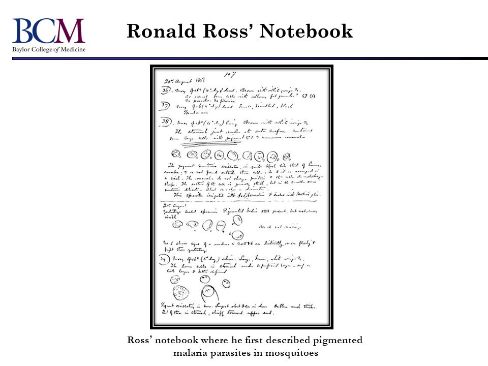 Ronald Ross Notebook Ross notebook where he first described pigmented malaria parasites in mosquitoes