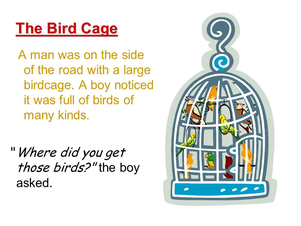 A man was on the side of the road with a large birdcage.