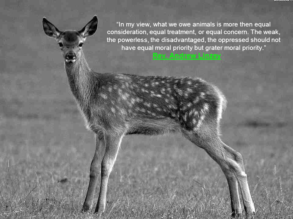 Cruelty to animals is the degrading attitude of paganism. Cardinal Arthur Hinsley (1865-1943) [Archbishop of Westminster]