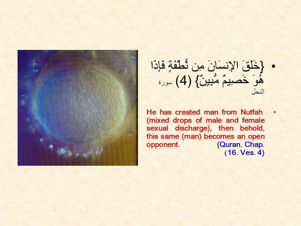 { خَلَقَ الإِنسَانَ مِن نُّطْفَةٍ فَإِذَا هُوَ خَصِيمٌ مُّبِينٌ } ( 4) سورة النحل He has created man from Nutfah (mixed drops of male and female sexual discharge), then behold, this same (man) becomes an open opponent.