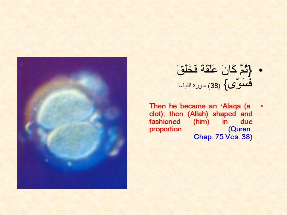 { ثُمَّ كَانَ عَلَقَةً فَخَلَقَ فَسَوَّى } ( 38 ) سورة القيامة Then he became an Alaqa (a clot); then (Allah) shaped and fashioned (him) in due proportion (Quran.