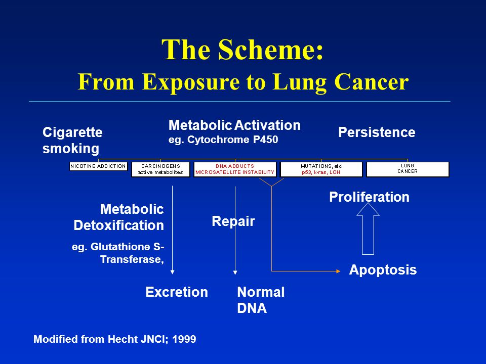 The Scheme: From Exposure to Lung Cancer Repair Cigarette smoking Metabolic Activation eg. Cytochrome P450 Persistence Metabolic Detoxification eg. Gl