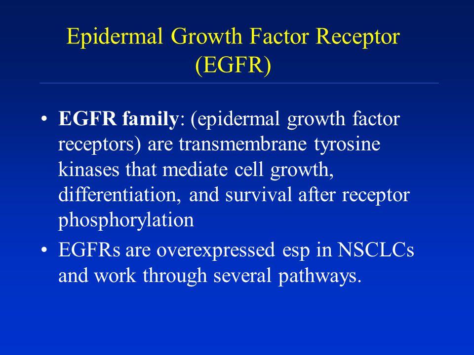 Epidermal Growth Factor Receptor (EGFR) EGFR family: (epidermal growth factor receptors) are transmembrane tyrosine kinases that mediate cell growth,
