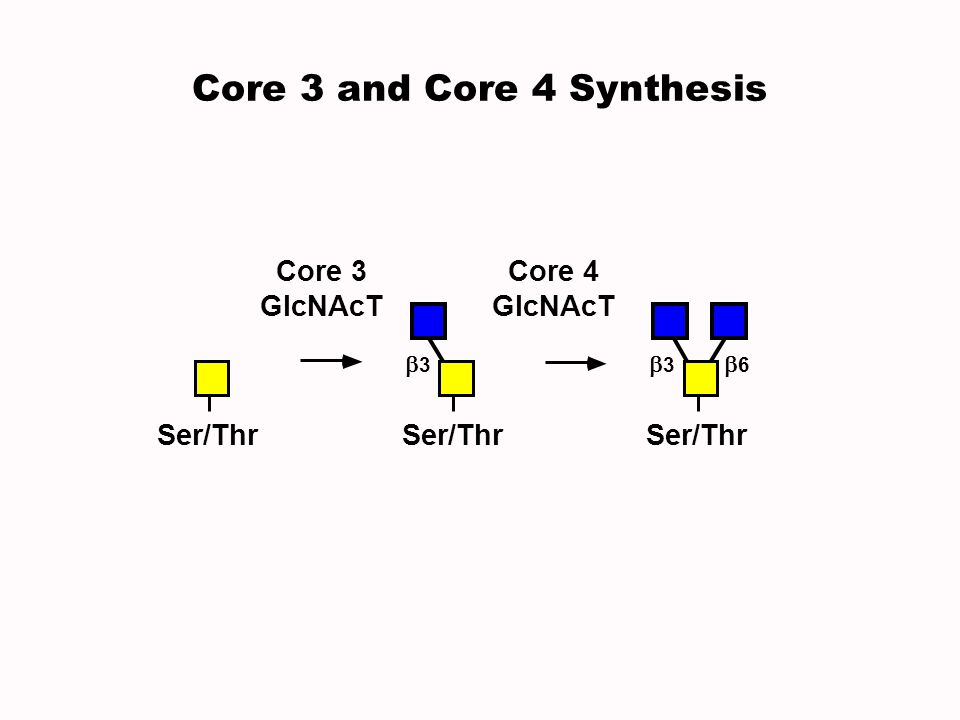 Core 4 GlcNAcT Core 3 GlcNAcT Ser/Thr 3 6 3 Core 3 and Core 4 Synthesis
