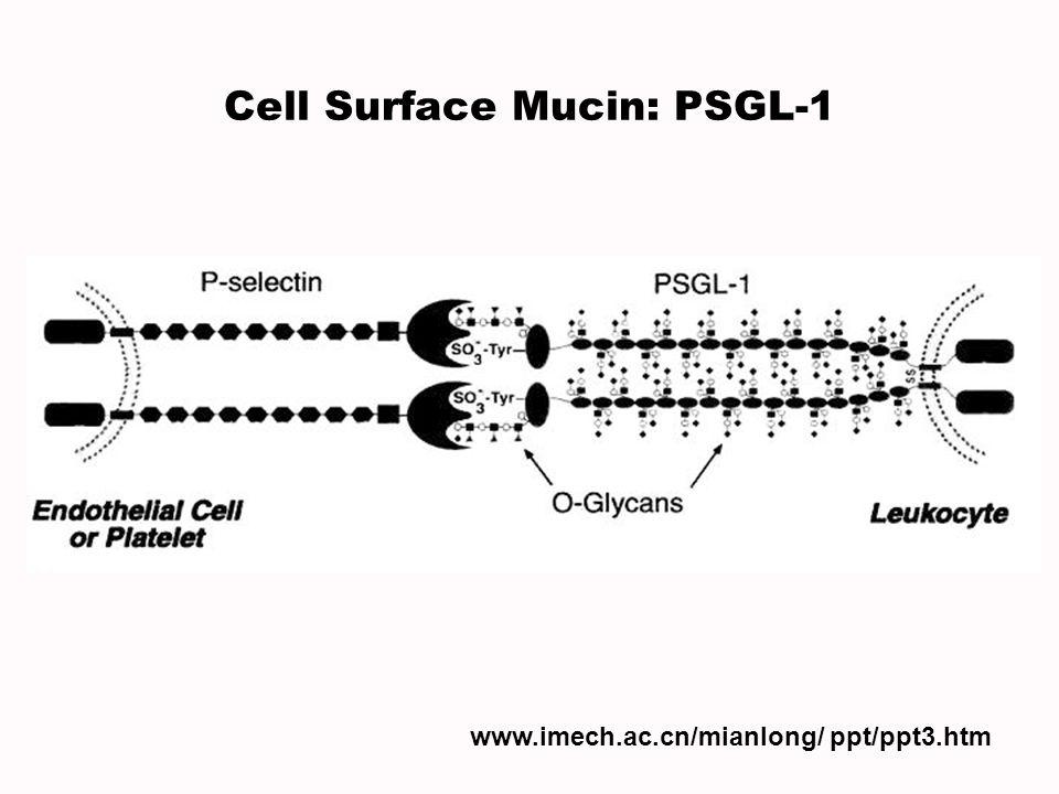 Cell Surface Mucin: PSGL-1 www.imech.ac.cn/mianlong/ ppt/ppt3.htm