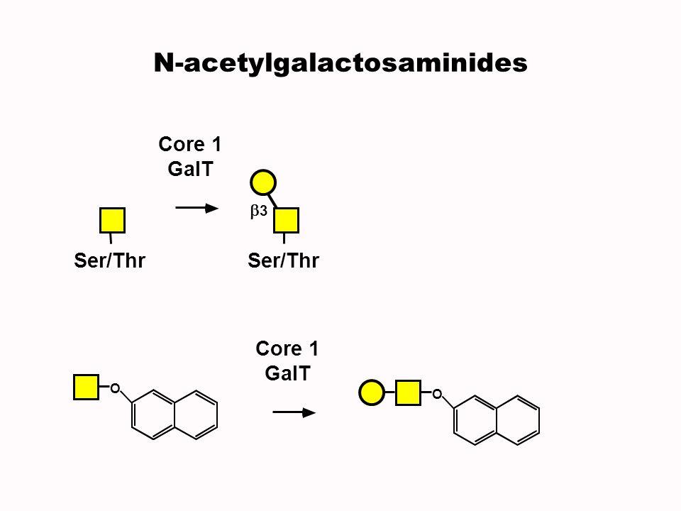 Core 1 GalT Ser/Thr 3 N-acetylgalactosaminides O O Core 1 GalT