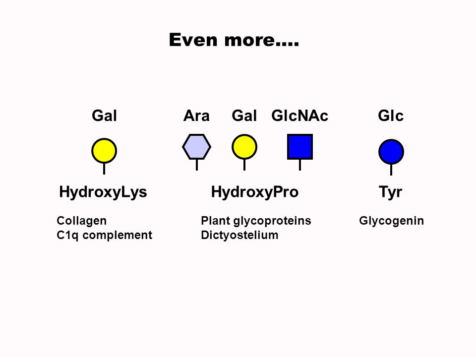 Even more…. HydroxyLys Gal Collagen C1q complement Plant glycoproteins Dictyostelium HydroxyPro AraGalGlcNAc Tyr Glycogenin Glc
