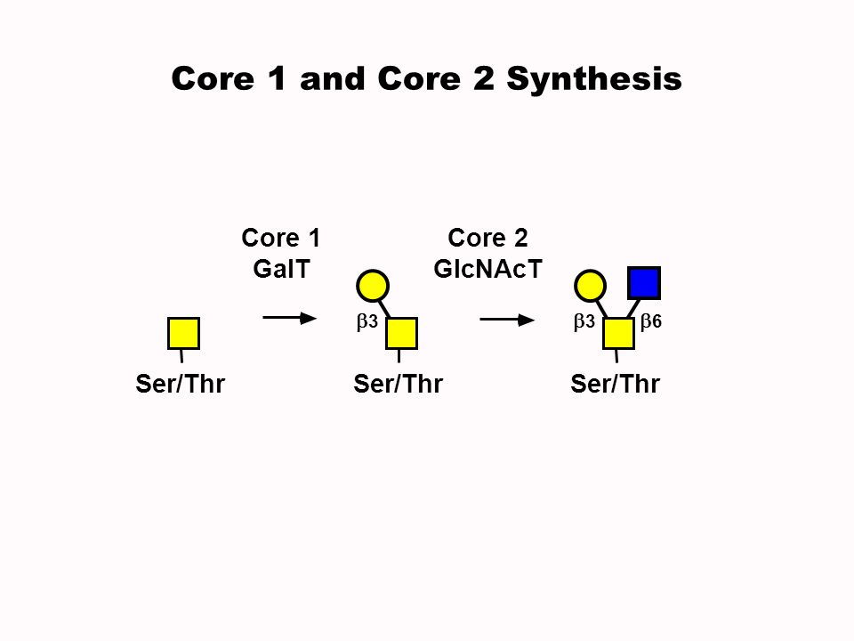 Core 2 GlcNAcT Core 1 GalT Ser/Thr 3 6 3 Core 1 and Core 2 Synthesis