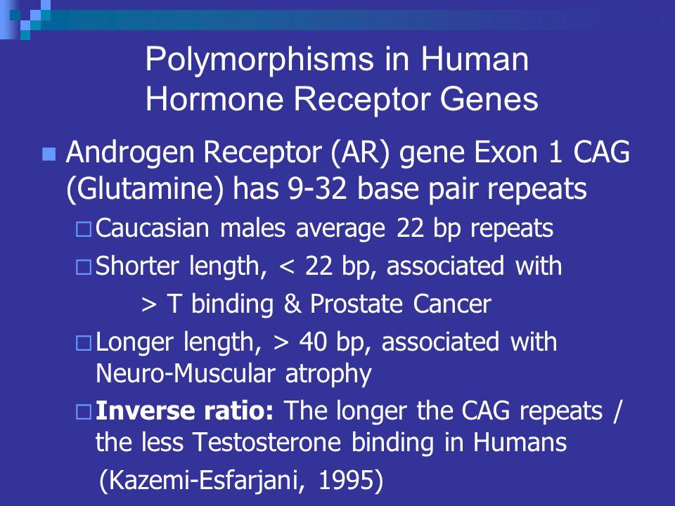 Polymorphisms in Human Hormone Receptor Genes Androgen Receptor (AR) gene Exon 1 CAG (Glutamine) has 9-32 base pair repeats Caucasian males average 22 bp repeats Shorter length, < 22 bp, associated with > T binding & Prostate Cancer Longer length, > 40 bp, associated with Neuro-Muscular atrophy Inverse ratio: The longer the CAG repeats / the less Testosterone binding in Humans (Kazemi-Esfarjani, 1995)