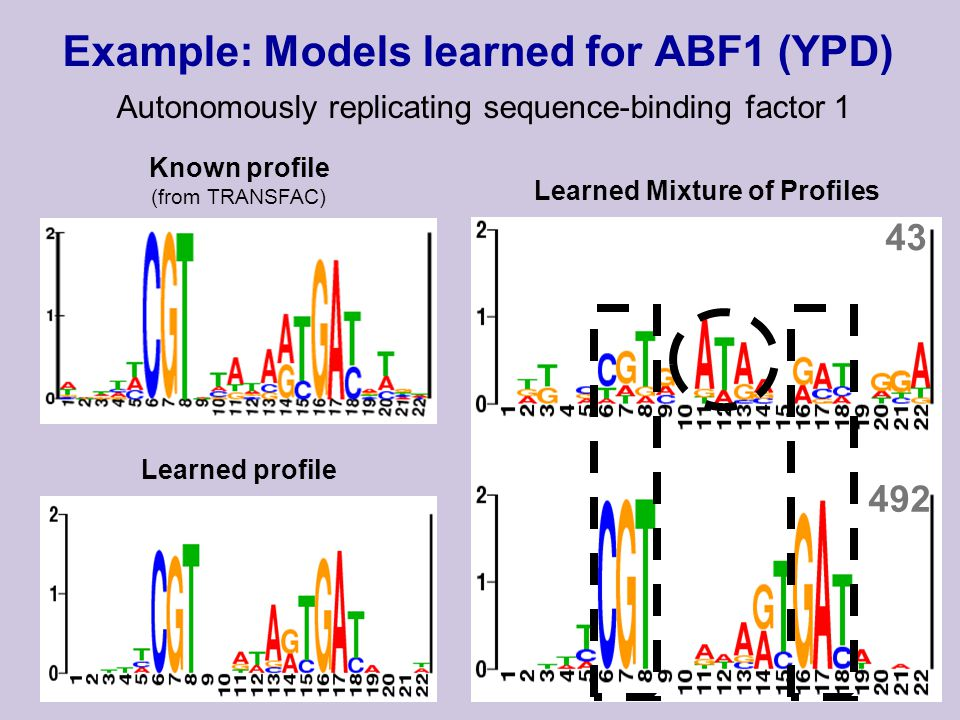 Learned Mixture of Profiles 43 492 Example: Models learned for ABF1 (YPD) Autonomously replicating sequence-binding factor 1 Learned profile Known profile (from TRANSFAC)