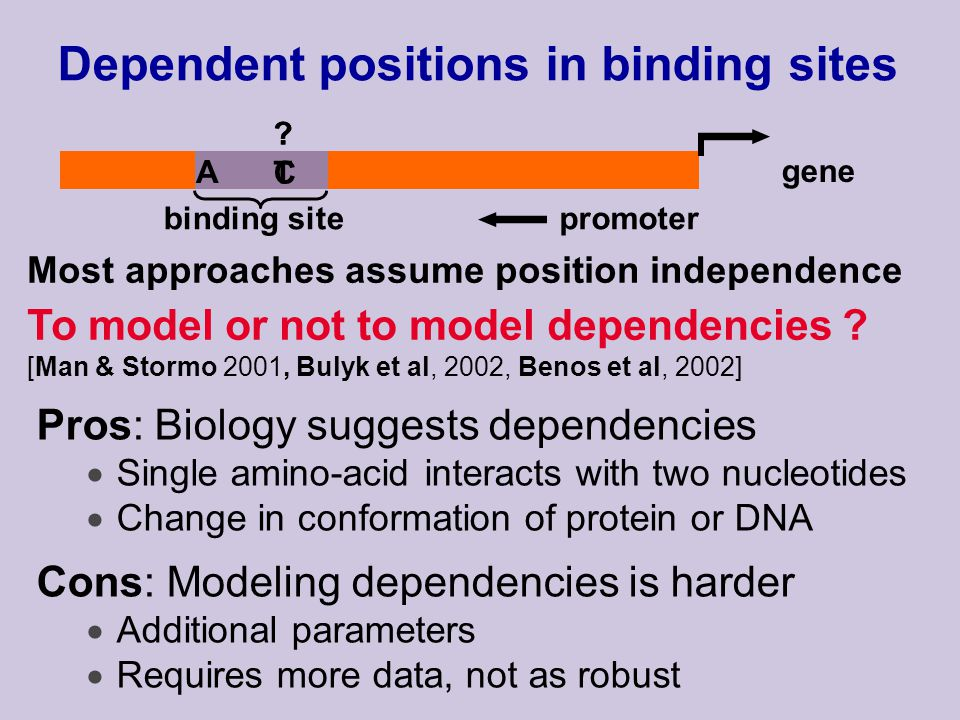 promoter gene binding site Dependent positions in binding sites Pros: Biology suggests dependencies Single amino-acid interacts with two nucleotides Change in conformation of protein or DNA Cons: Modeling dependencies is harder Additional parameters Requires more data, not as robust A C C T T To model or not to model dependencies .