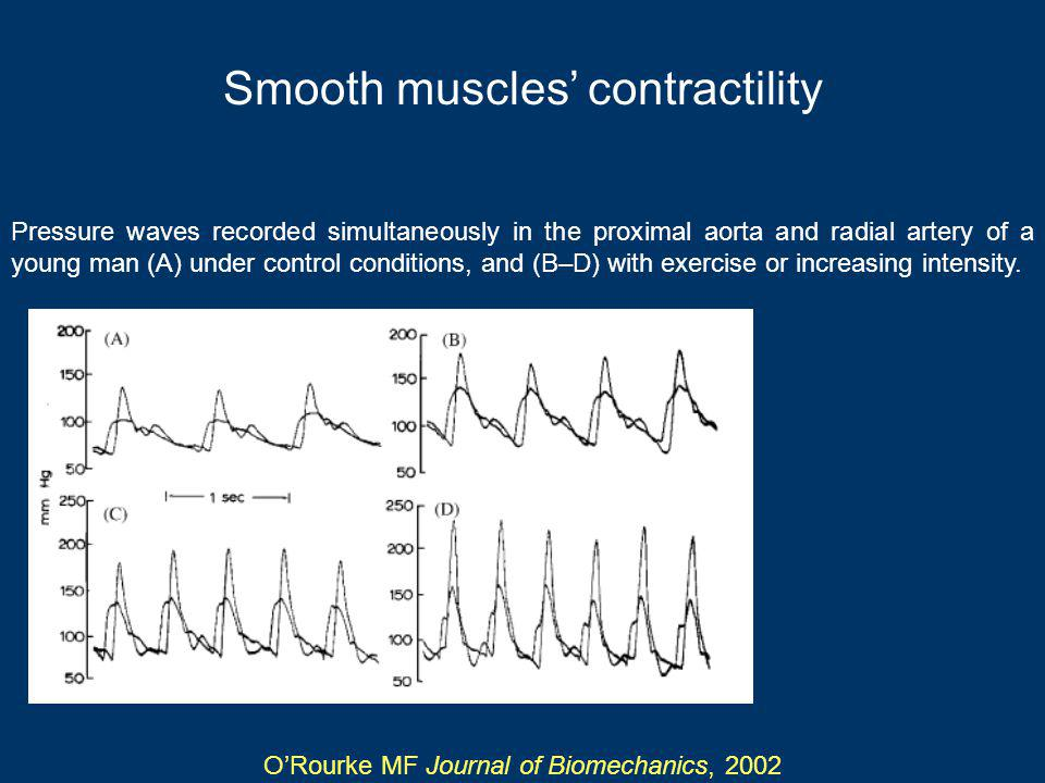 Smooth muscles contractility Pressure waves recorded simultaneously in the proximal aorta and radial artery of a young man (A) under control conditions, and (B–D) with exercise or increasing intensity.