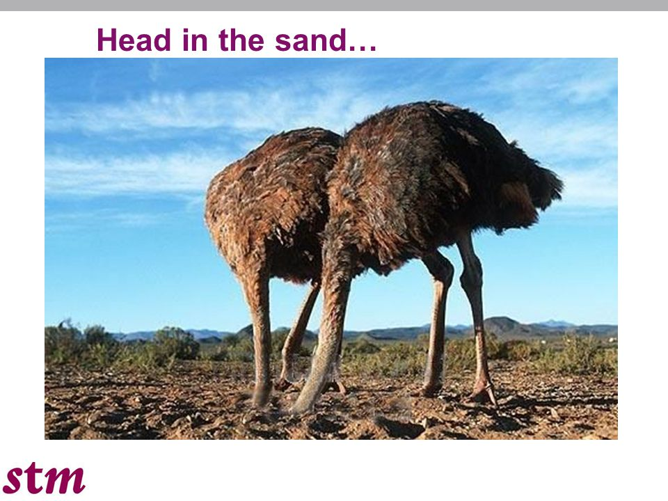 Head in the sand…
