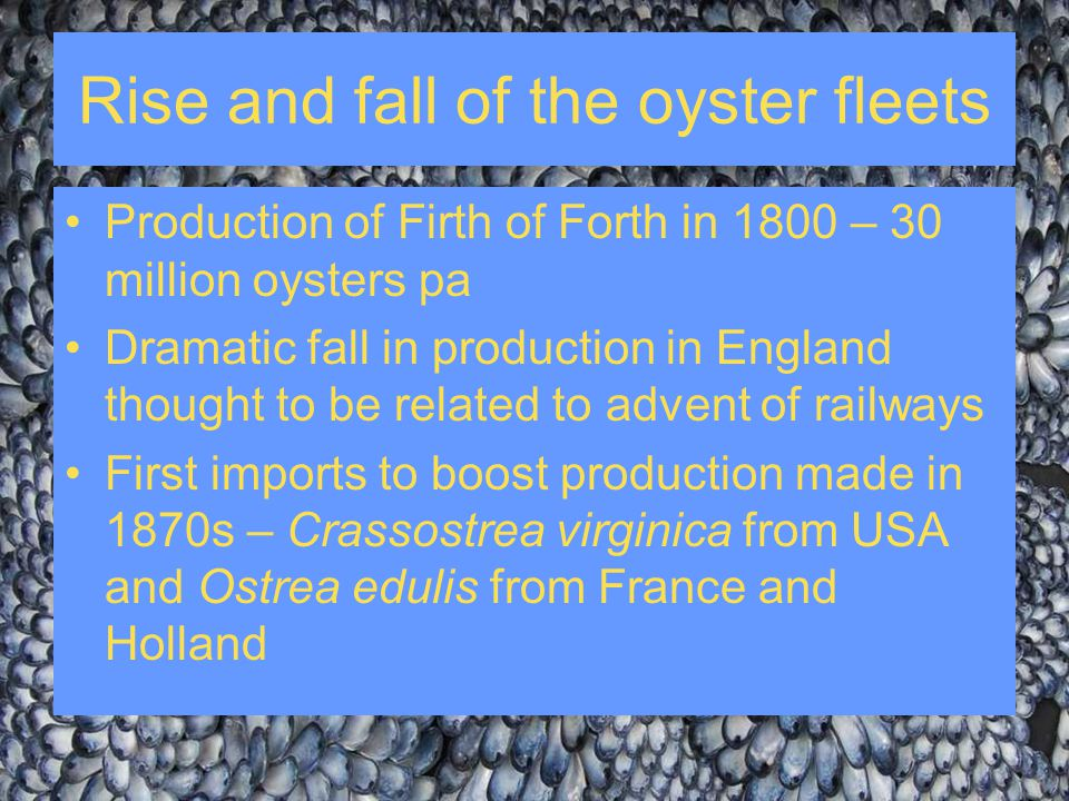 Rise and fall of the oyster fleets Production of Firth of Forth in 1800 – 30 million oysters pa Dramatic fall in production in England thought to be r