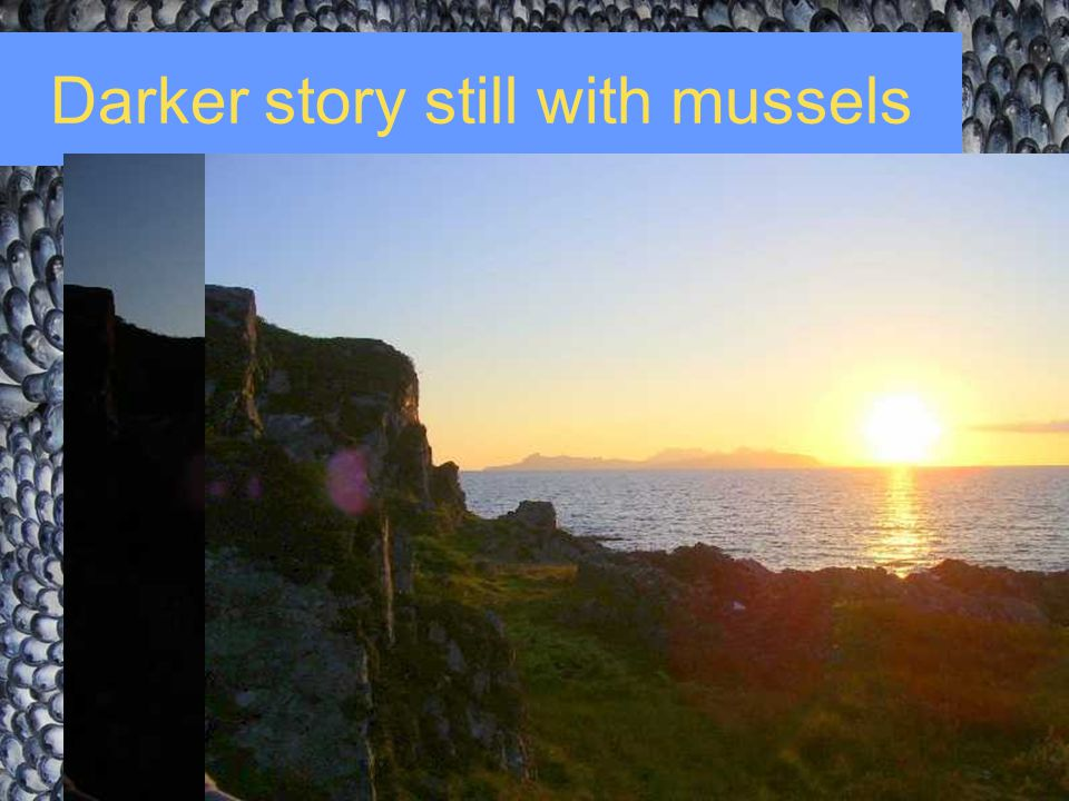 Darker story still with mussels