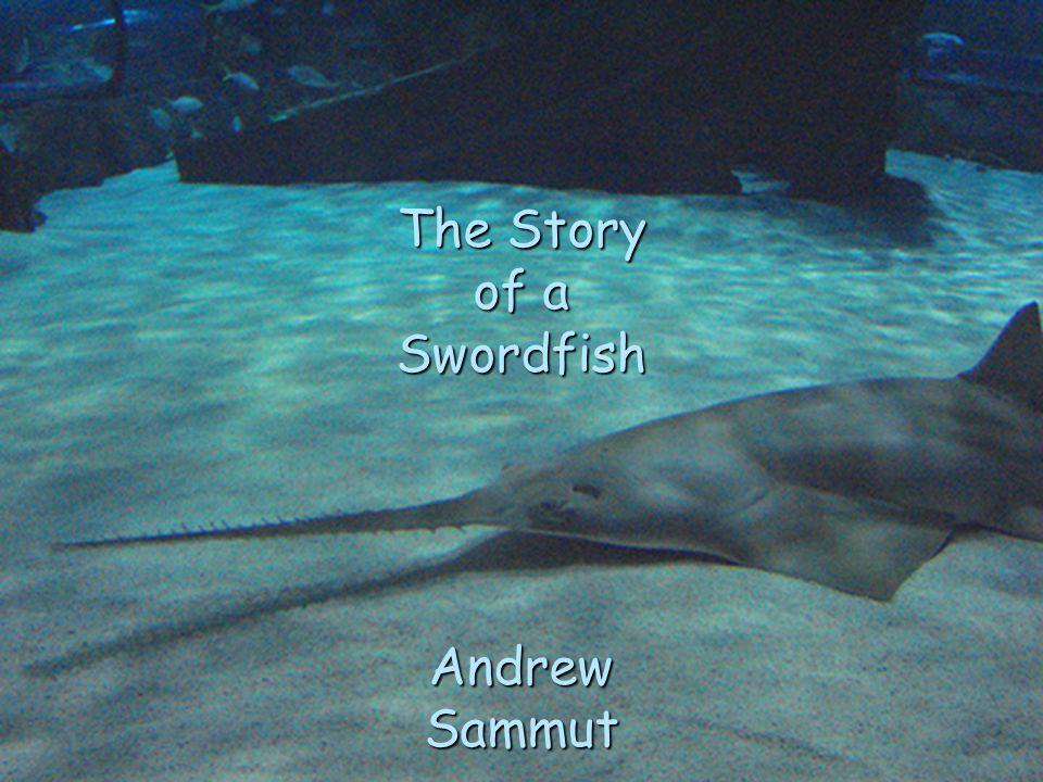 The Story of a Swordfish Andrew Sammut