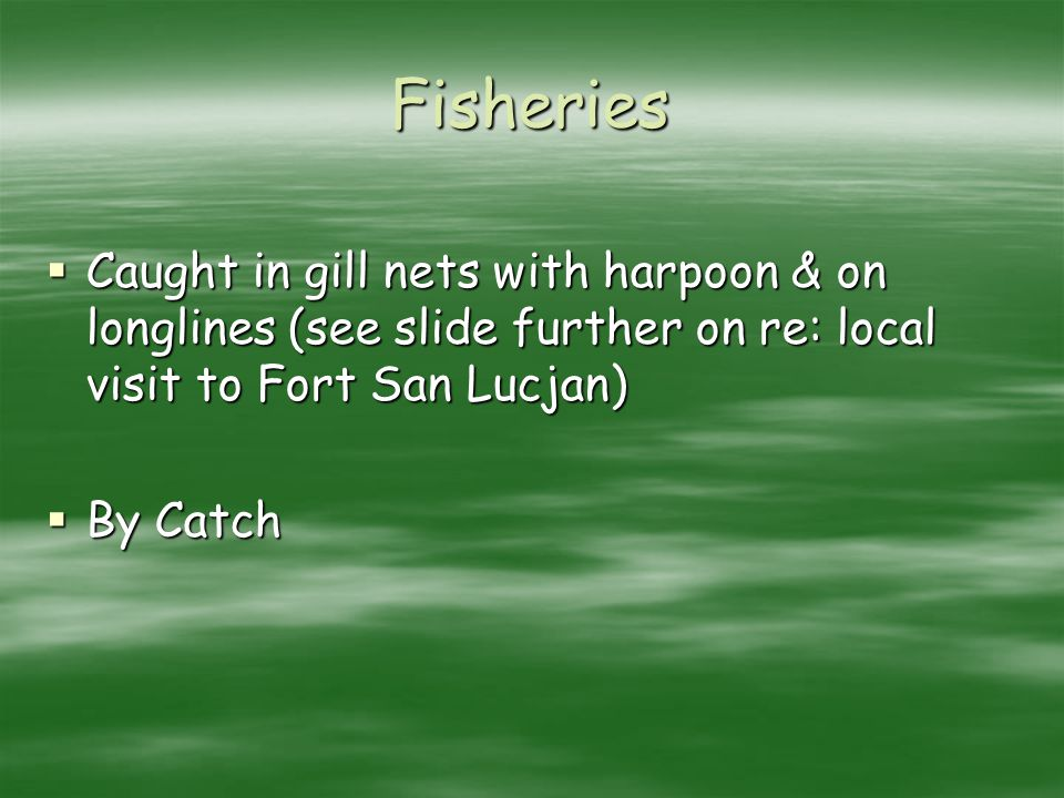 Fisheries Caught in gill nets with harpoon & on longlines (see slide further on re: local visit to Fort San Lucjan) Caught in gill nets with harpoon &