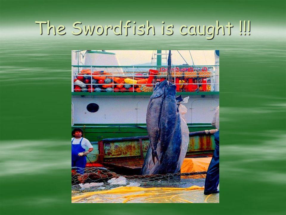 The Swordfish is caught !!!