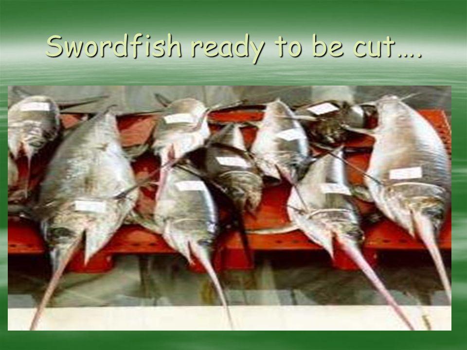Swordfish ready to be cut….