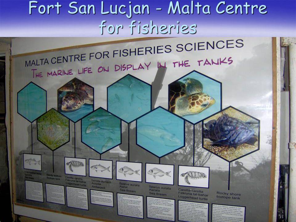 Fort San Lucjan - Malta Centre for fisheries