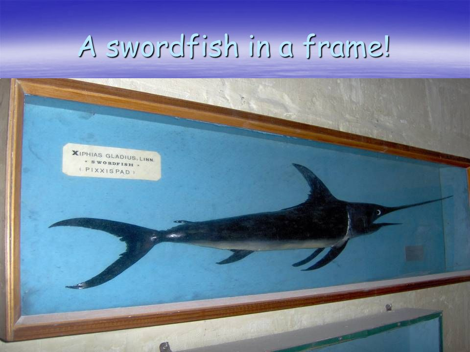 A swordfish in a frame !