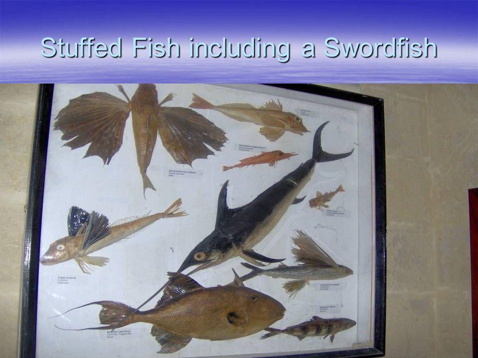 Stuffed Fish including a Swordfish