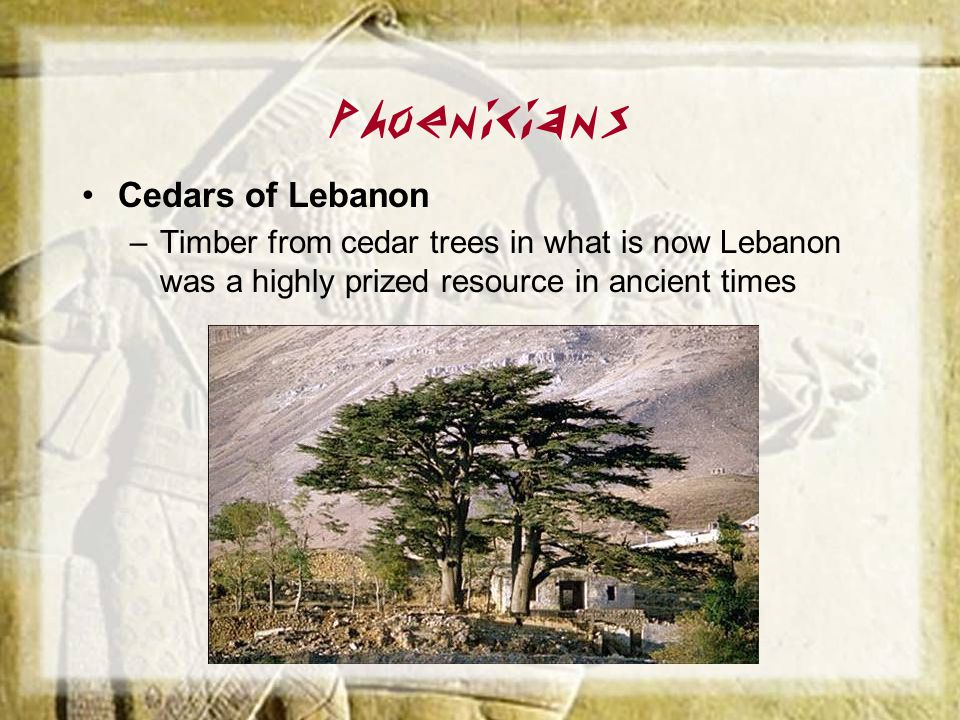 Phoenicians Cedars of Lebanon –Timber from cedar trees in what is now Lebanon was a highly prized resource in ancient times