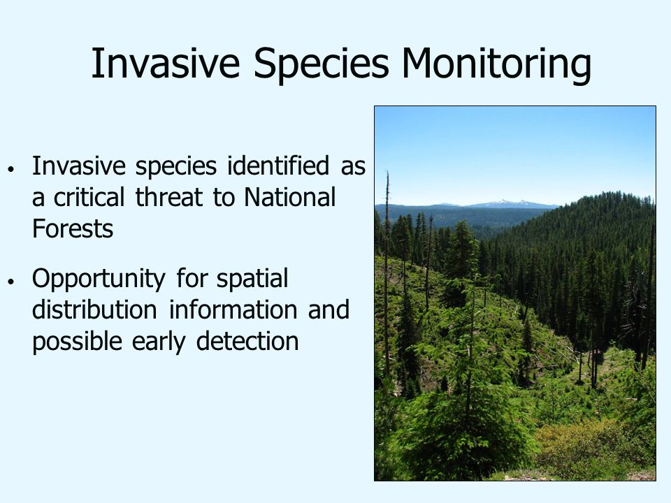 Invasive Species Monitoring Invasive species identified as a critical threat to National Forests Opportunity for spatial distribution information and possible early detection