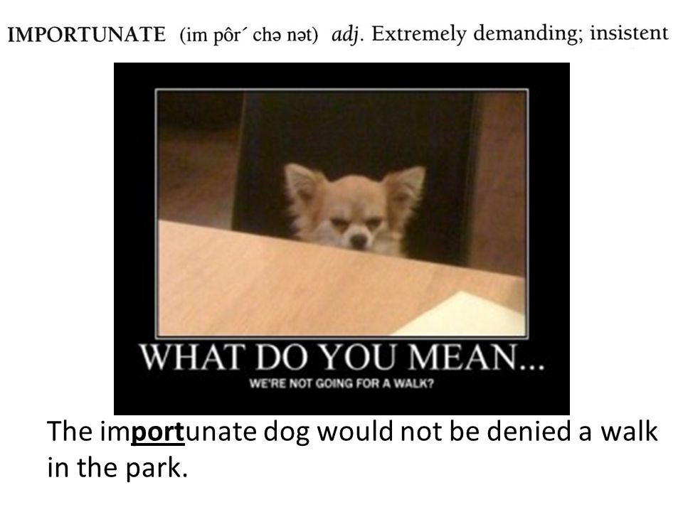 The importunate dog would not be denied a walk in the park.