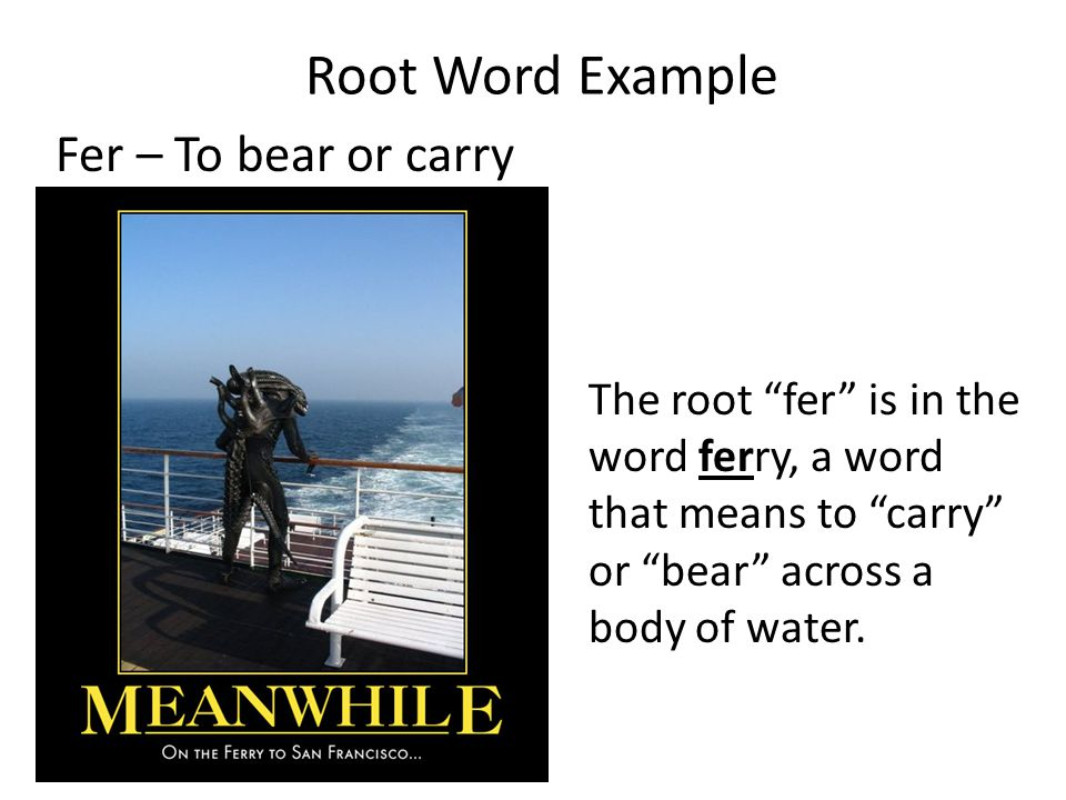 Root Word Example Fer – To bear or carry The root fer is in the word ferry, a word that means to carry or bear across a body of water.