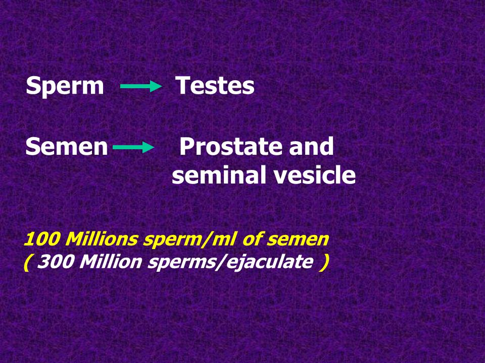 Sperm Testes 100 Millions sperm/ml of semen ( 300 Million sperms/ejaculate ) Semen Prostate and seminal vesicle