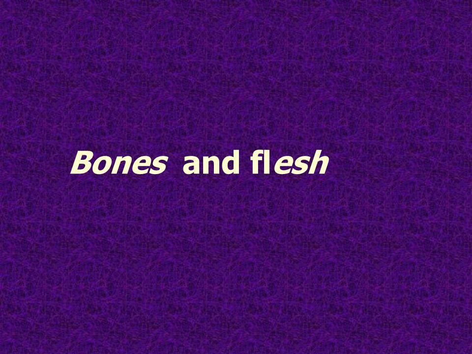 Bones and flesh