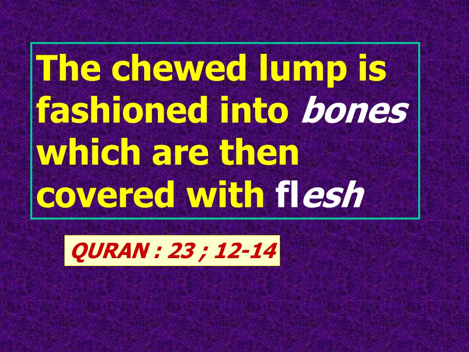 QURAN : 23 ; 12-14 The chewed lump is fashioned into bones which are then covered with flesh