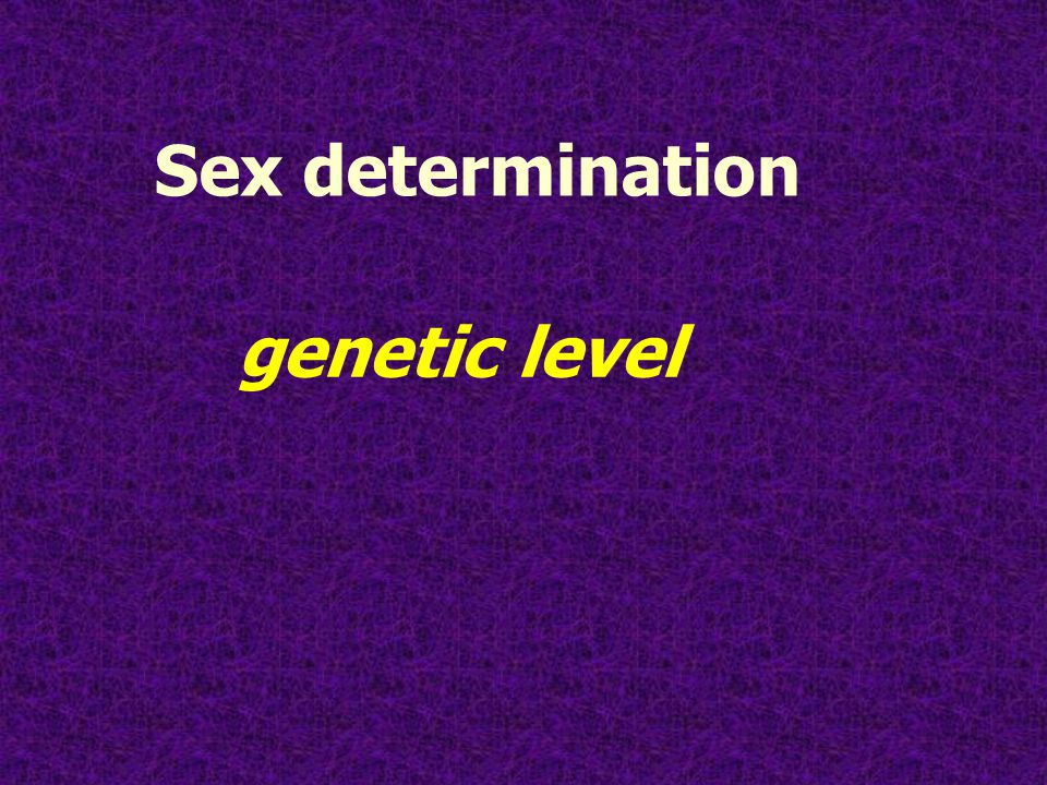 Sex determination genetic level