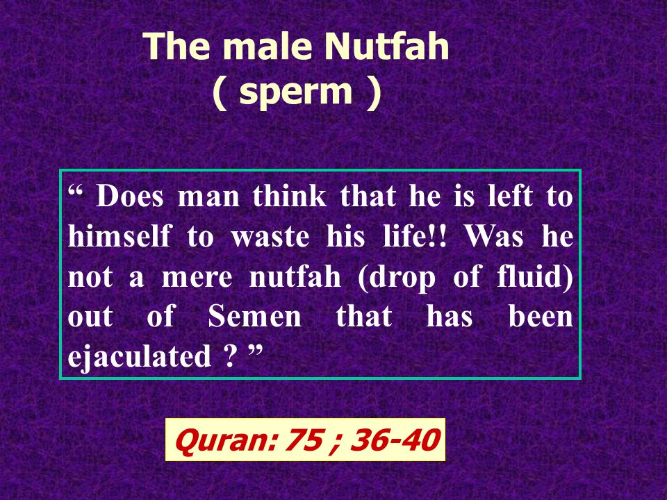 The male Nutfah ( sperm ) Does man think that he is left to himself to waste his life!.