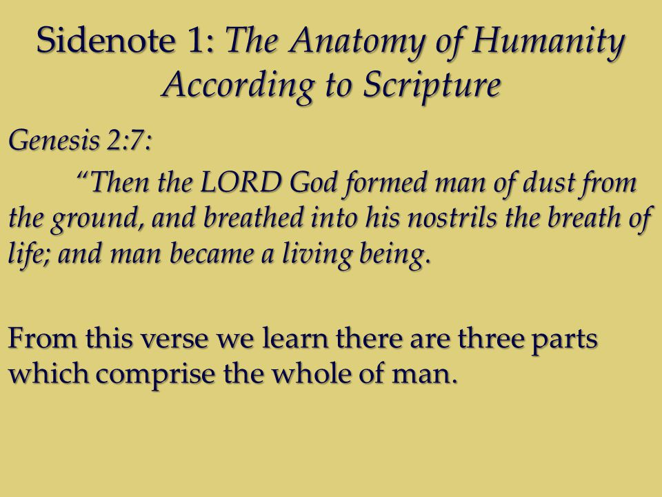 Sidenote 1: The Anatomy of Humanity According to Scripture Genesis 2:7: Then the LORD God formed man of dust from the ground, and breathed into his nostrils the breath of life; and man became a living being.