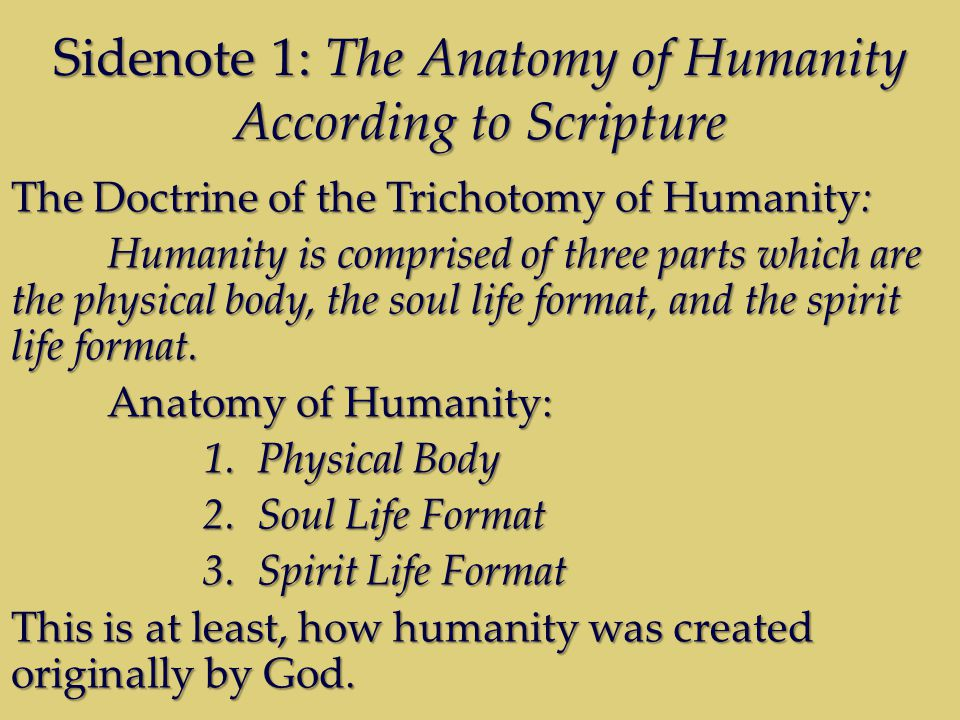 Sidenote 1: The Anatomy of Humanity According to Scripture The Doctrine of the Trichotomy of Humanity: Humanity is comprised of three parts which are the physical body, the soul life format, and the spirit life format.