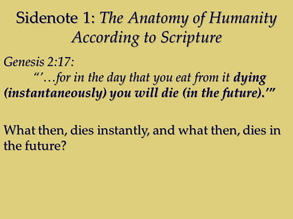Sidenote 1: The Anatomy of Humanity According to Scripture Genesis 2:17: …for in the day that you eat from it dying (instantaneously) you will die (in the future).