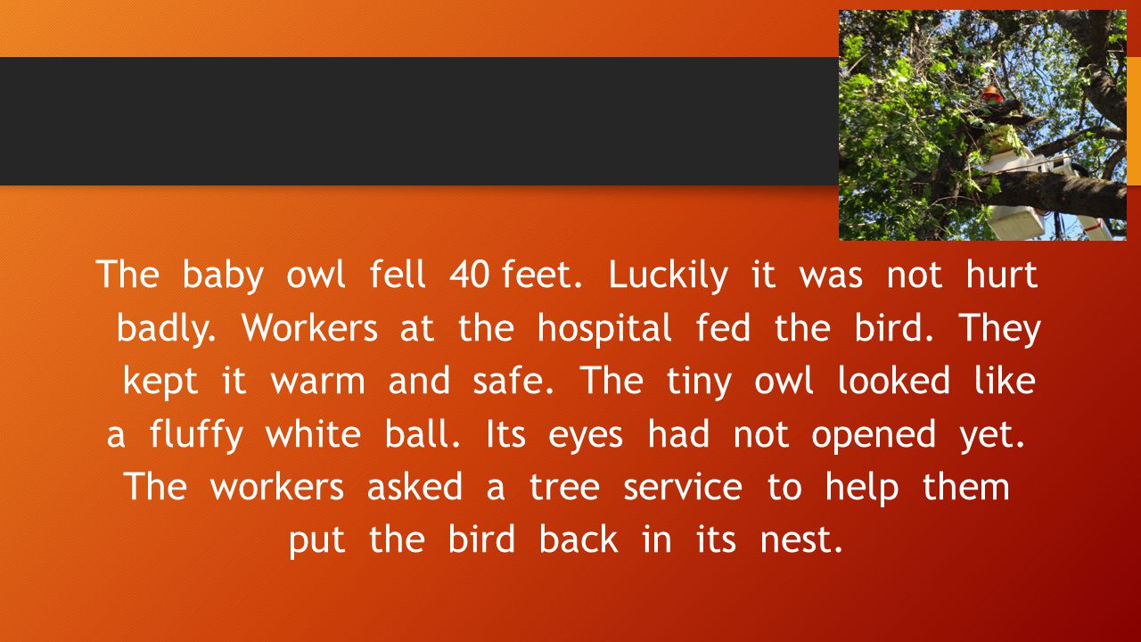 The baby owl fell 40 feet. Luckily it was not hurt badly. Workers at the hospital fed the bird. They kept it warm and safe. The tiny owl looked like a