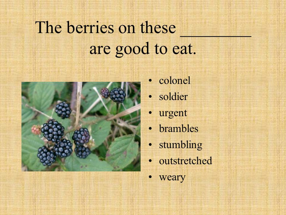 The berries on these ________ are good to eat. colonel soldier urgent brambles stumbling outstretched weary