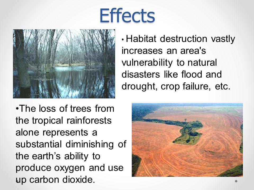 Habitat destruction vastly increases an area s vulnerability to natural disasters like flood and drought, crop failure, etc.