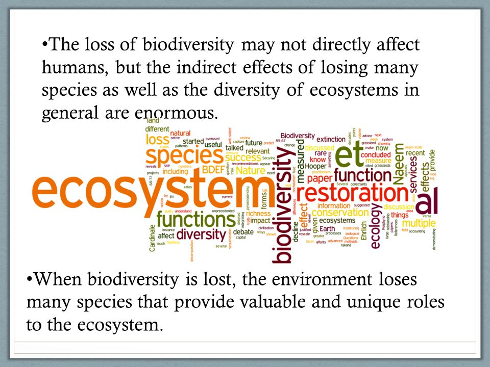 The loss of biodiversity may not directly affect humans, but the indirect effects of losing many species as well as the diversity of ecosystems in general are enormous.