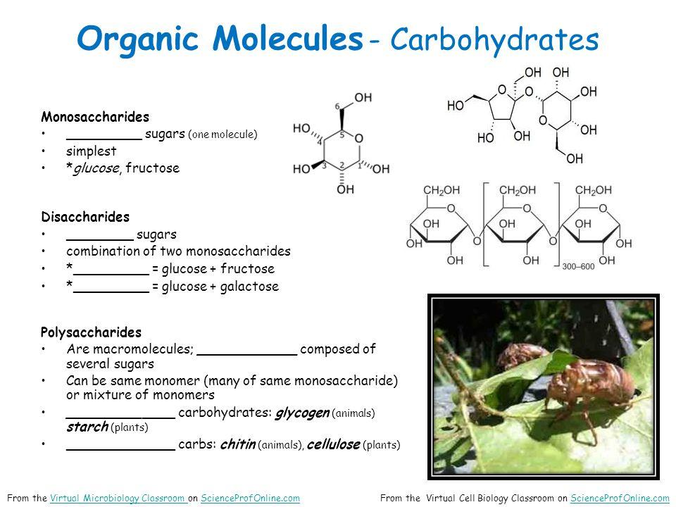 Organic Molecules - Carbohydrates Monosaccharides _________ sugars (one molecule) simplest *glucose, fructose Disaccharides ________ sugars combinatio